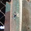 diamond covered artistic bat